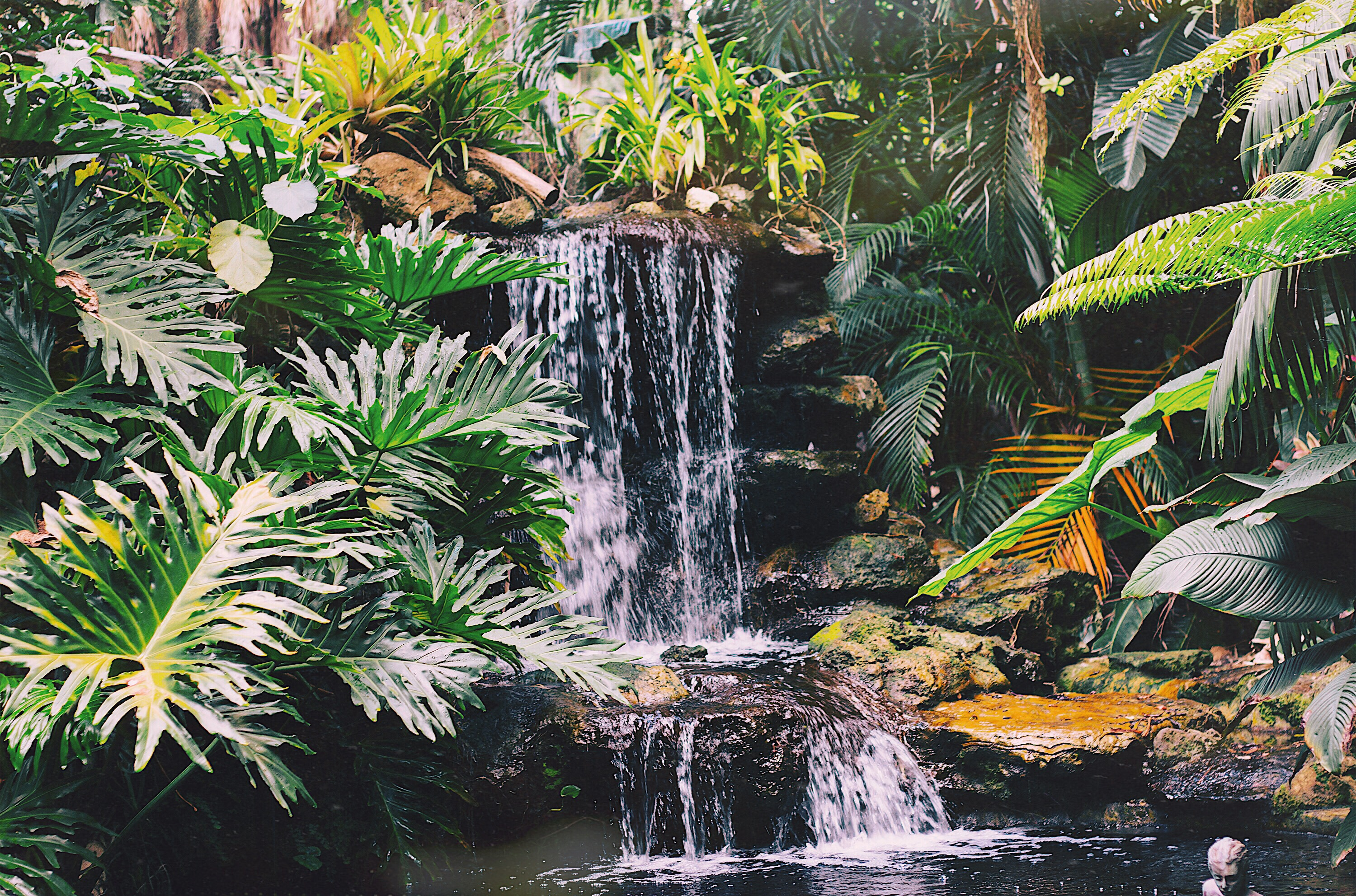 Waterfall Tropical